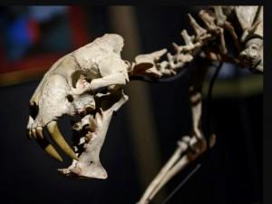Скелет гоплофона продадут с аукциона в Женеве