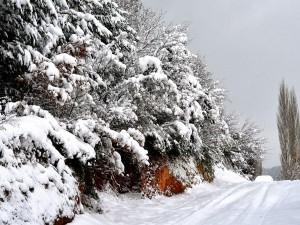 Сильный мороз ударит в Челябинской области в ночь на воскресенье