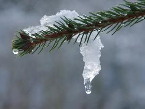 Оттепель? До +1 поднимутся температуры в Челябинске 25 января