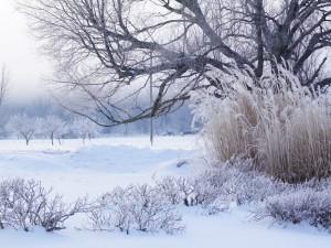 Аномальные морозы в крещенскую неделю в Челябинской области отменяются