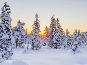 Морозы простоят неделю, заявили в Гидрометцентре