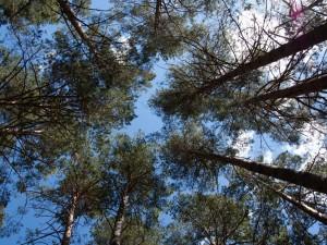 «Мы готовы посадить деревья вперед»: представитель ЧОДКБ о строительстве детской хирургии в сосновом бору