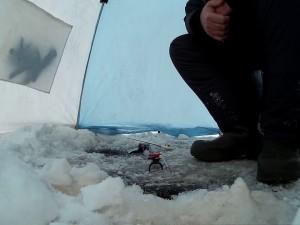 Зимняя рыбалка в Челябинской области: жители региона все чаще переходят на подледный корм
