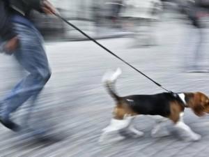 Ребенок видел, как гибнет его собака, получившая удар током