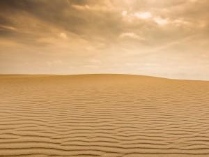 Продать песок в Сахару предложил властям России Игорь Стрелков, начавший войну в Донбассе