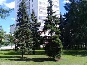 Чему учатся зарубежные урбанисты у российских?