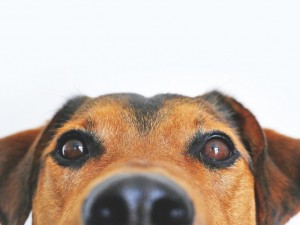 Убийство собаки в главном парке Челябинске стало поводом для уголовного дела