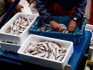 Самая дешевая рыба станет дороже в России из-за нововведений правительства