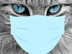 Академик спрогнозировал эпидемию ковида среди домашних животных