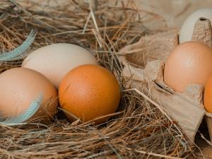Сдерживать рост цен на мясо птицы и яйца договорились отечественные производители