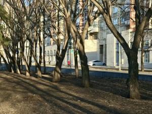 Не надо красить деревья, об этом напомнил главный архитектор Челябинска