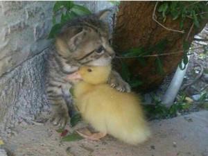 Почему в Инстаграмме так много зверят, похожих на «котенка по имени Гав»