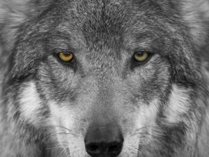 Протесты и «нашествие волков» стали главными страхами россиян в последнее время