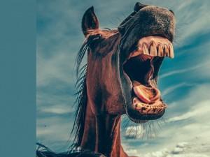 В Челябинской области на женщину напала лошадь. С лошадиными укусами женщина обратилась к общественности