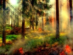 Особый противопожарный режим ввели в Челябинской области