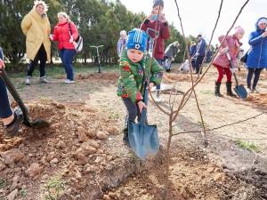 27 миллионов деревьев в память о Великой Отечественной высадят волонтеры. РМК - генеральный партнер проекта