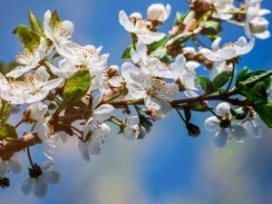 20-градусную жару ждут в Челябинске и Магнитогорске в майские праздники